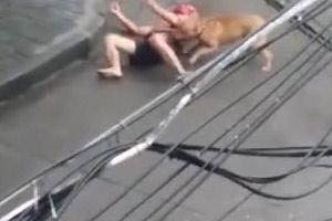 Dog Attacks Man