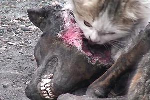 Cats Eating Dog Food